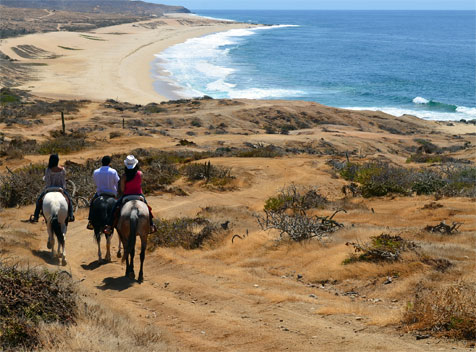 Horseback rides on purebred quarter horses in Los Cabos, Mexico